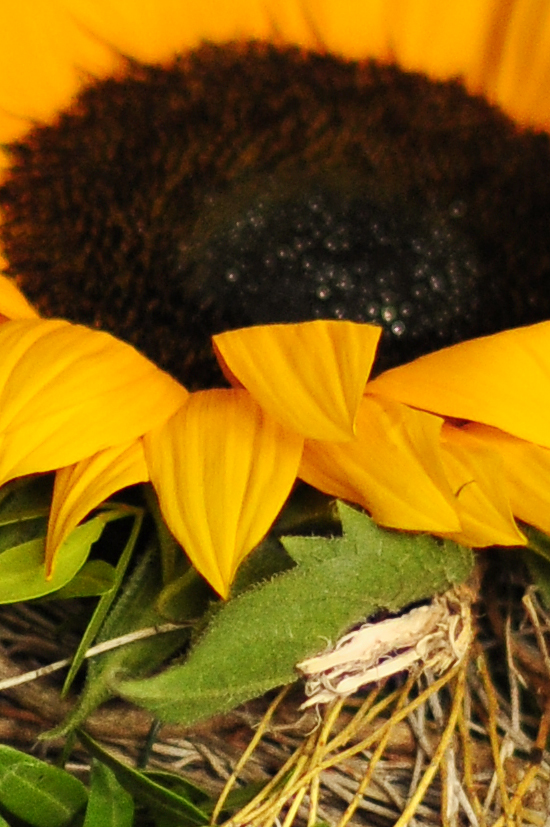 Blumenstrauß Herbst Sonnenblume